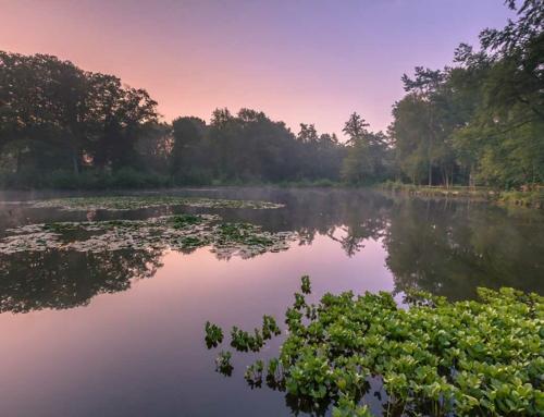 Ontwikkelingsopgave Natura2000 Springendal – Dal van de Mosbeek